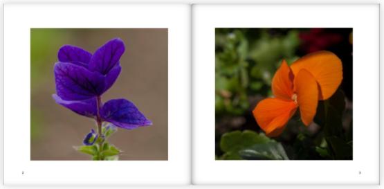 Flora I by stephane loustalot